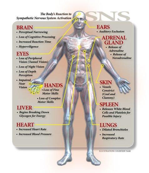 Στρες, Ορμόνες & νόσος