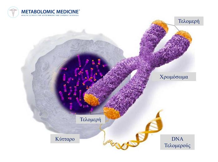 Έλληνες Ερευνητές Ανακάλυψαν Φυσική Ουσία που Ενεργοποιεί το «Ένζυμο της Αθανασίας»