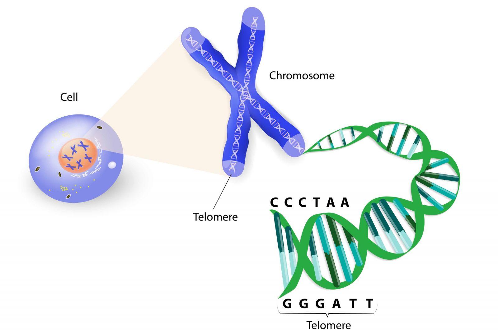 Ορισμός ραντεβού DNA